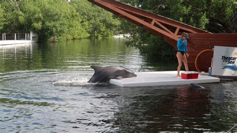 Florida Keys Swim with Dolphins Tour and TicketDolphin