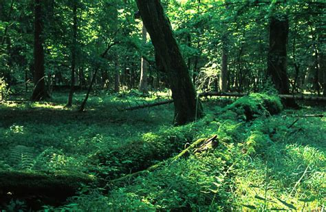 The Last Deep Dark Primeval Forest in Europe? – Mike Pole