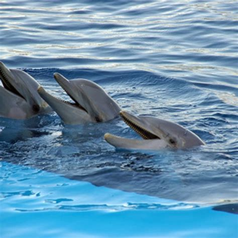 Swimming with Dolphins in the Florida Keys | USA Today