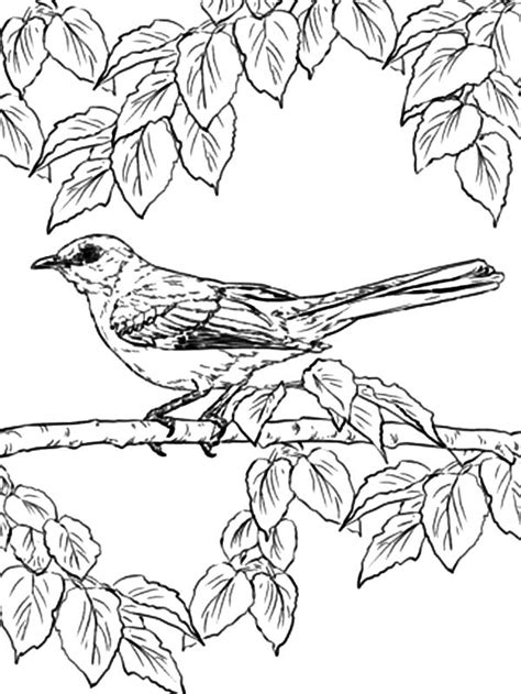 Free Printable Coloring Pages - Part 32