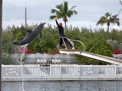 dolphin show - Picture of Theater of the Sea, Islamorada