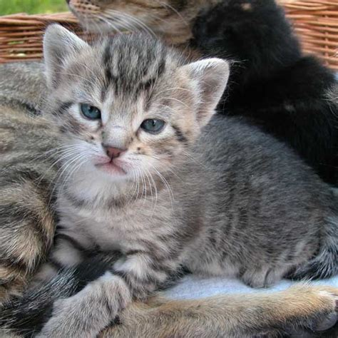 Chatons a donner 13 - Annonces chatons