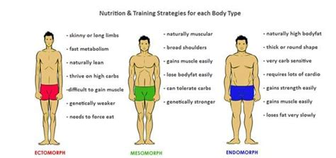 How does body-type affect training protocols? • Spotter Up