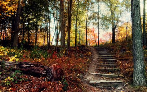Steps Deep Forest Wallpapers | HD Wallpapers | ID #17895